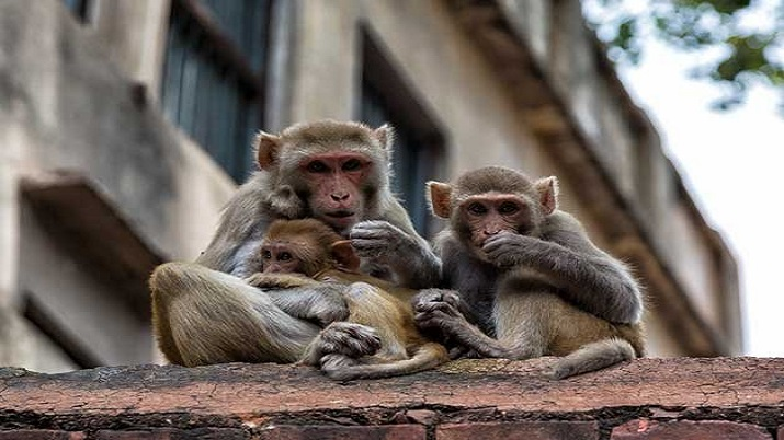 'Brain circuit involved in generating conscious awareness unravelled in monkeys' thumbnail