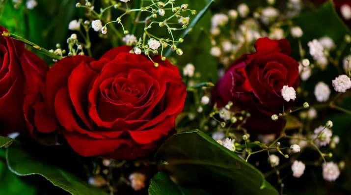 India Tv - Happy Rose Day
