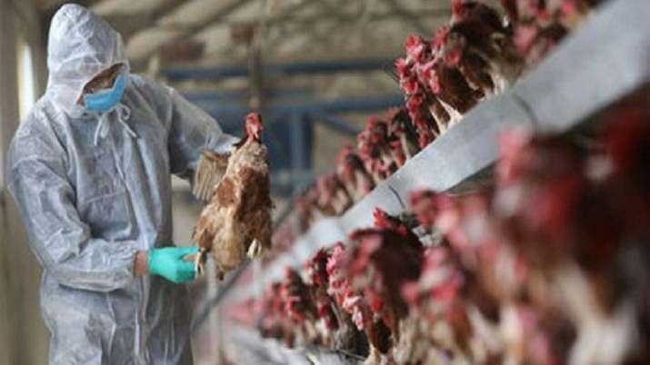 Bird flu, Kerala, Bird Flu outbreak, West Kodiyathur, Vengeri, Kozhikode