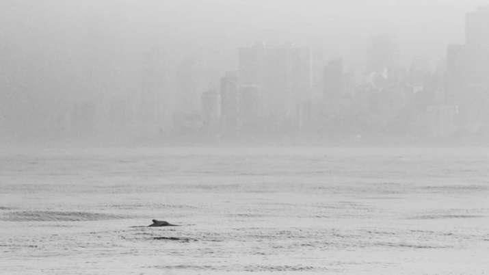 Videos of dolphins off Mumbai coast go viral amid coronavirus