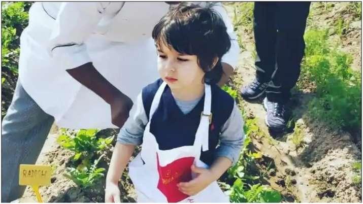 Kareena Kapoor's son Taimur picks organic veggies at a farm, video goes viral