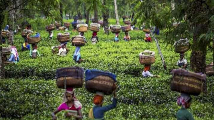 Coronavirus trouble for Indian tea, exports likely to be hit