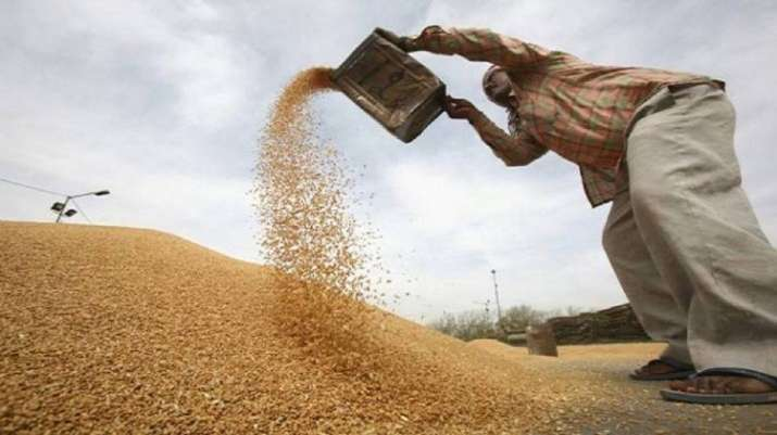 Wheat worth Rs 607 crore damaged in Punjab: CAG