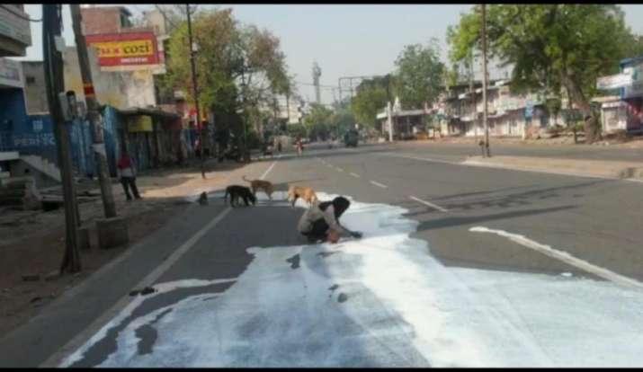 agra, man, milk, street, dogs