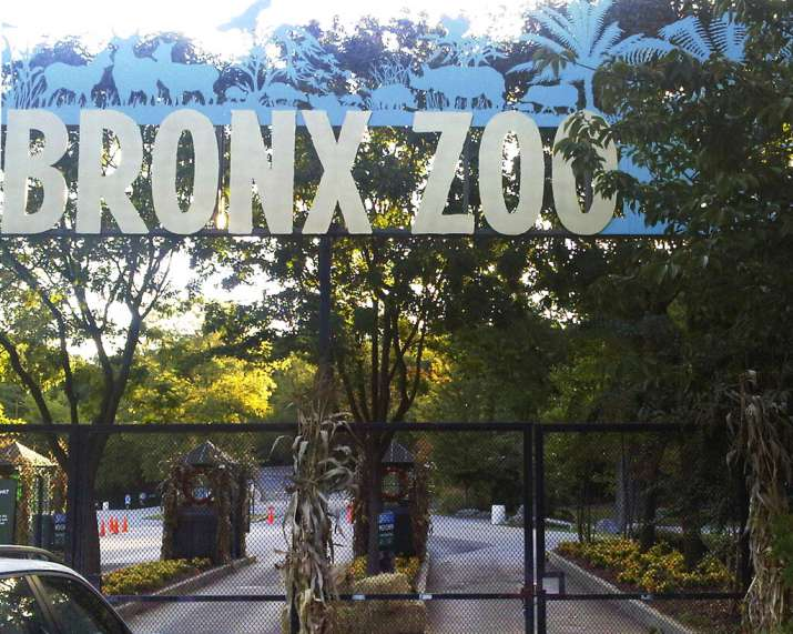 India Tv - FILE - This Sept. 21, 2012, file photo shows an entrance to the Bronx Zoo in New York. A tiger at th