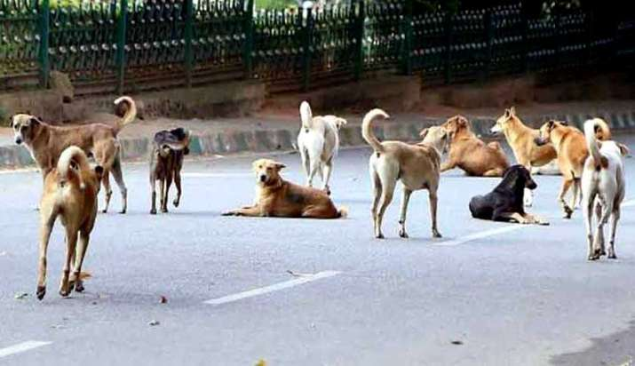 Lockdown, food shortage cause spike in Indore dog bite cases
