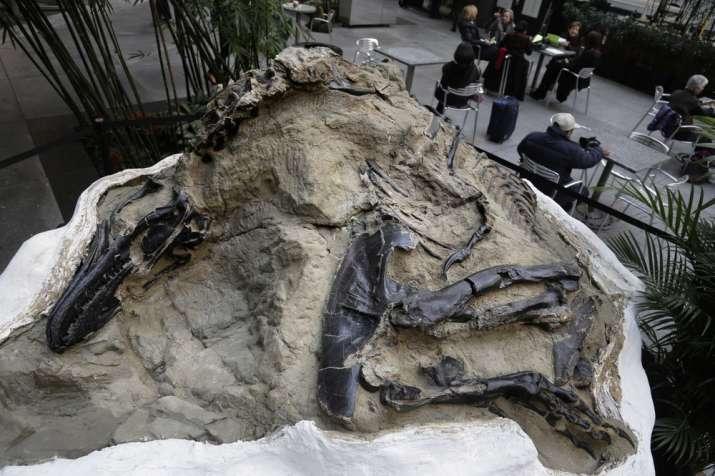 Rare 'toothless' dinosaur, Elaphrosaur discovered in Australia (Representational image)