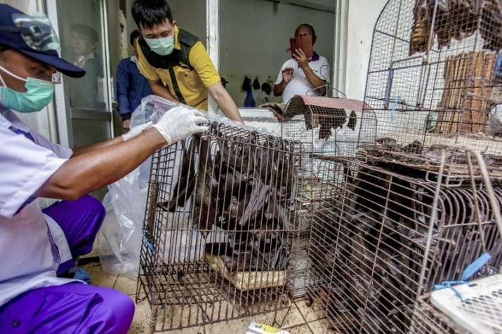 In this Saturday, March 14, 2020 file photo, health officials inspect bats to be confiscated and cul