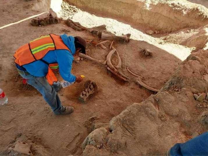 mammoths graveyard, mammoths mexico, giant graveyard of 60 mammoths, 60 mammoths, mammoths discovere