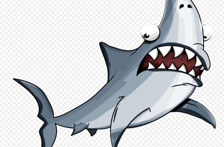 Video: Massive 30-foot-long shark shows up on Spanish beach