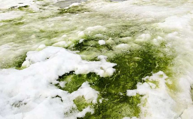 After blood-red snow, Antarctica now turns green