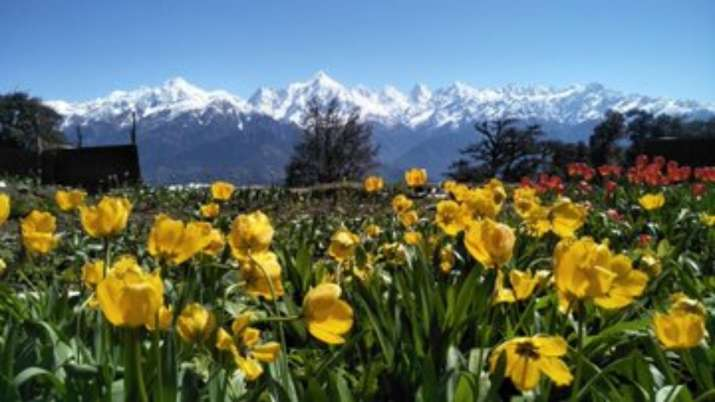 Breathtaking photos of Uttarakhand's Tulip garden with Panchachuli ranges in backdrop go viral