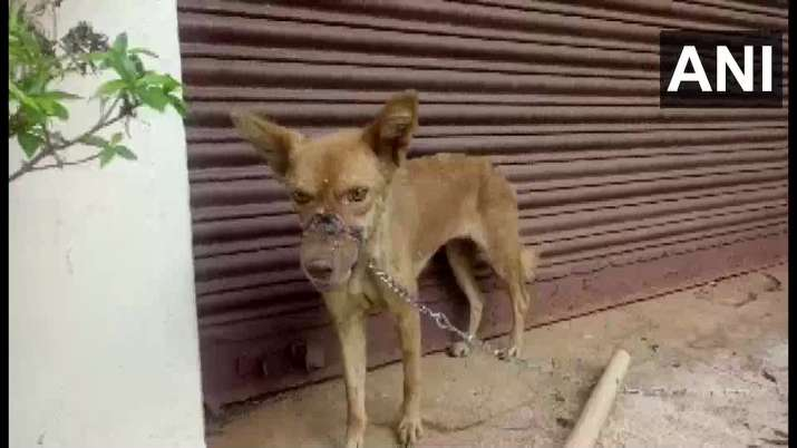 Act of barbarism: Dog chained, mouth sealed with insulation tape, and it's Kerala again