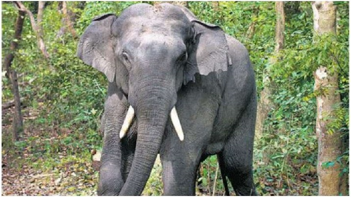 Woman killed in elephant attack in Chhattisgarh