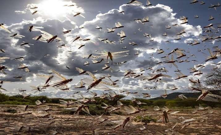 Locust swarm headed towards Banda