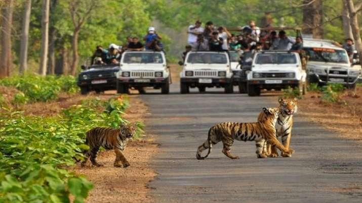 Madhya Pradesh, national parks, unlock guidelines