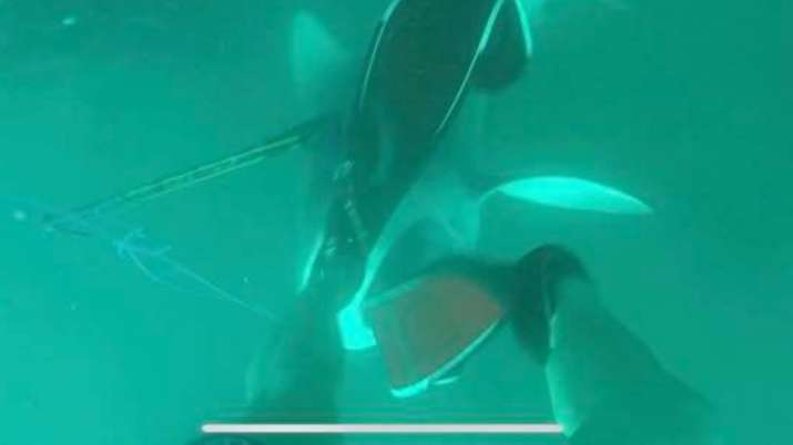Two minutes of Terror! Bull Shark steals flipper from diver's foot after he kicks it