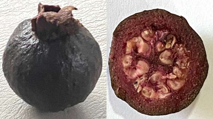 Rare black guavas' photos leave Twitterverse surprised. Seen yet?