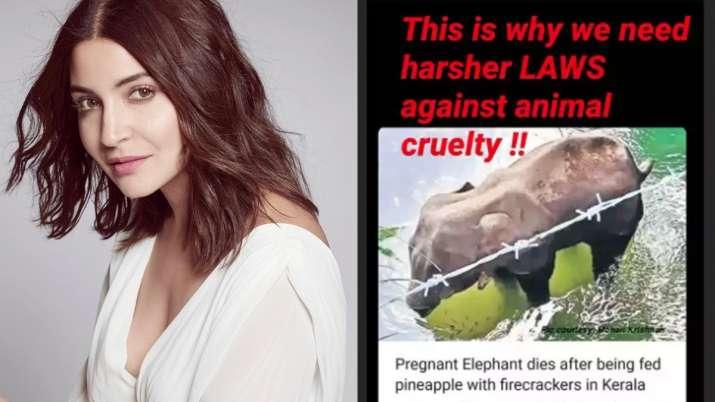 India Tv - Anushka Sharma condemns pregnant elephant's death