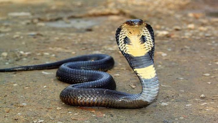 UP: 15-year-old boy dies after being bitten by snake in bed