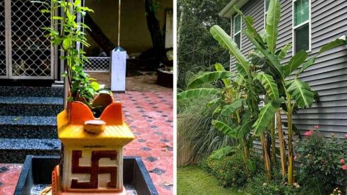 Vastu Tips: Planting Tulsi or banana tree at home keeps the environment healthy