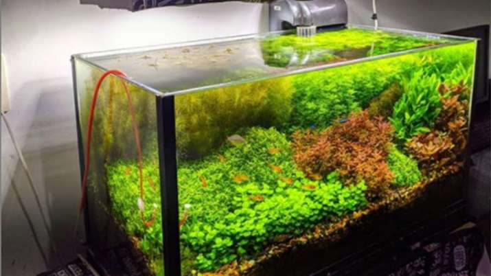 Vastu Tips: Never keep aquarium or any water show piece in South direction. Know why