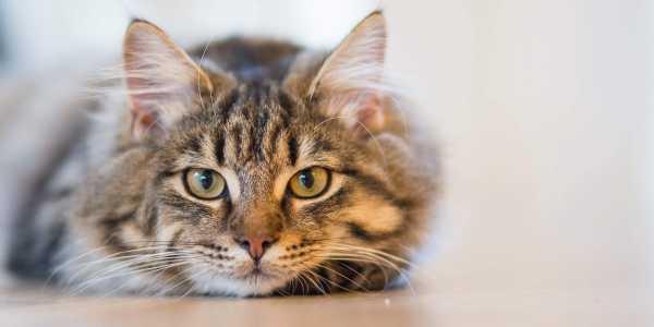 UK reports 1st animal COVID-19 case after pet cat tests coronavirus positive