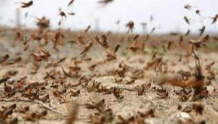 Giant Swarm Of Flying Ants Noticed From House Over Uk Watch