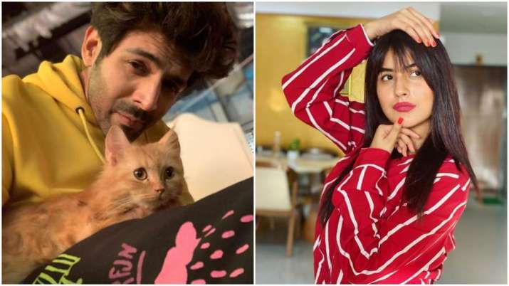 Kartik Aaryan's comment on Shehnaaz Gill's picture takes the internet by storm
