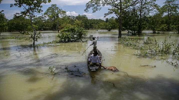 India Tv - Kaziranga National Park, Assam Floods