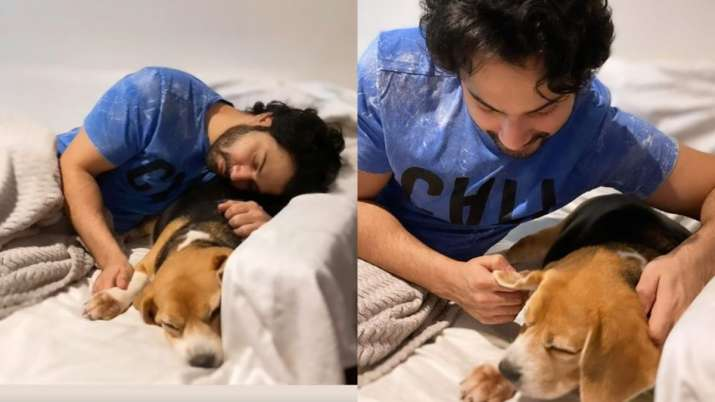 India Tv - Varun Dhawan shares adorable picture with his puppy Angel
