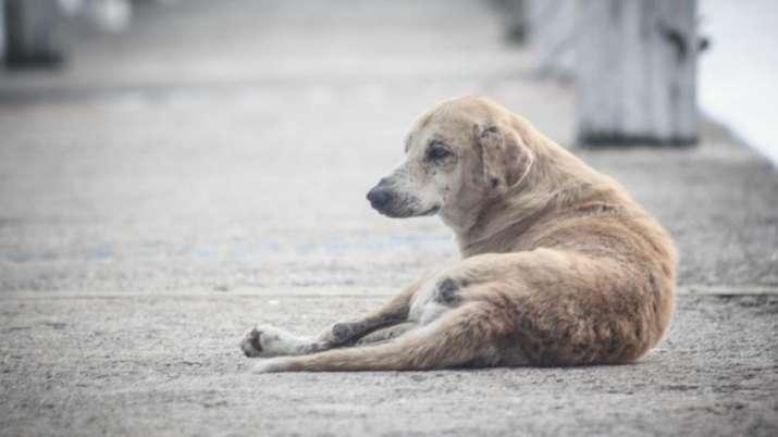 dog suicide after owner death, Dog suicide, dog suicide news, dog suicide jump, dog suicide news, do