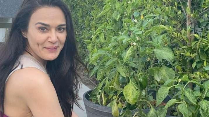 Preity Zinta enjoys organic farming, plucks homegrown capsicum
