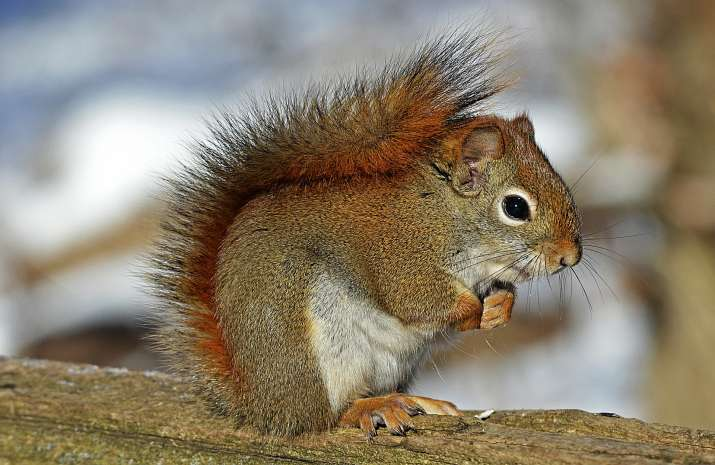 Squirrel in USA tests positive for Bubonic Plague after outbreak began in China