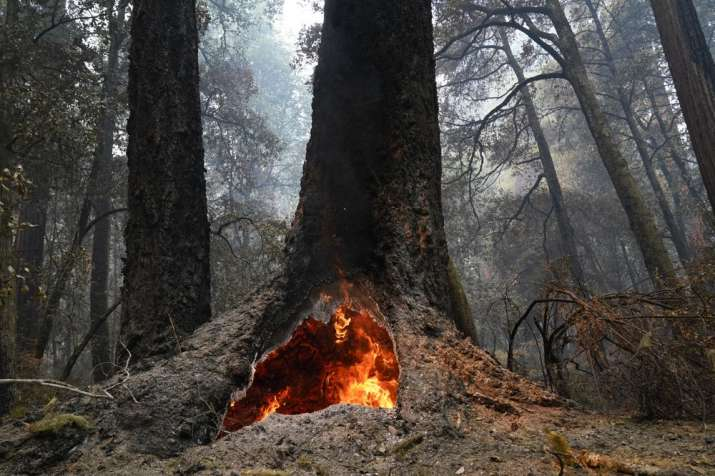 Fire burns in the hollow of an old-growth redwood tree in Big Basin Redwoods State Park, Calif., Mon