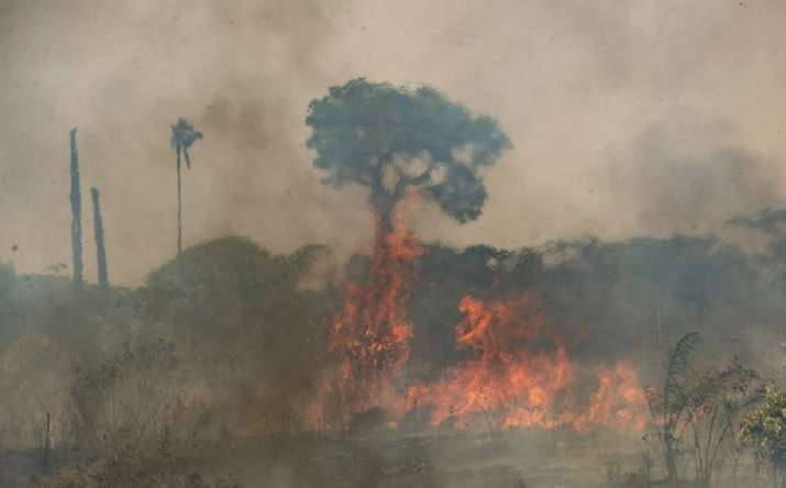 India Tv - Amazon forest fire