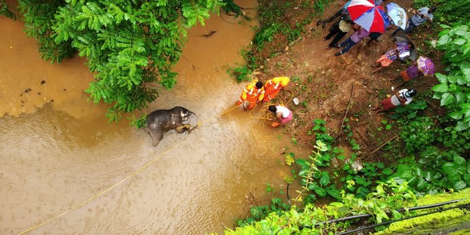 India Tv - A baby elephant found dead under Achankovil bridge near Pandalam in Pathanamthitta district