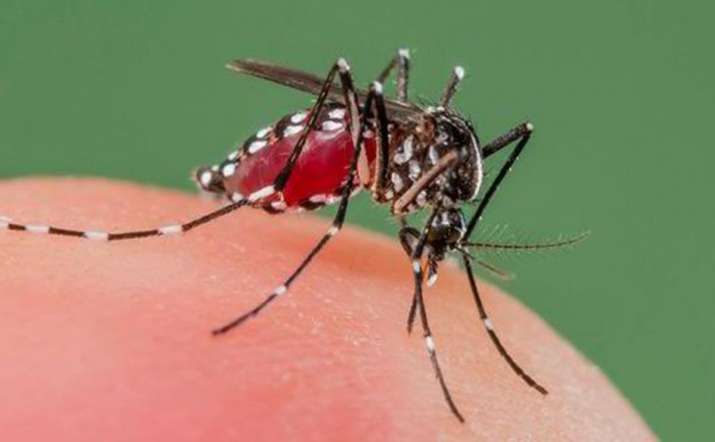 Spain reports 1st West Nile virus death in 2020