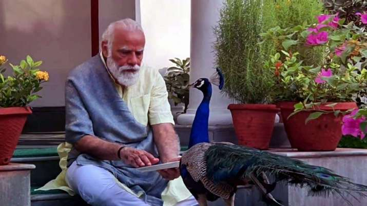 PM Modi feeds peacocks home exercise watch video | India News – India TV