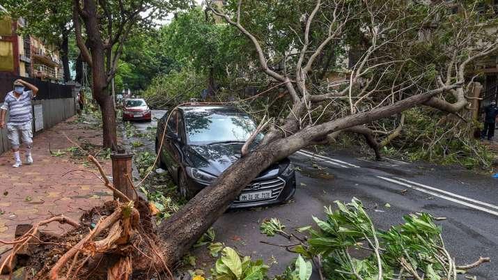 India Tv - Mumbai: A woman walks towarads an uprooted tree, following heavy rainfall, at Marine Drive in Mumbai