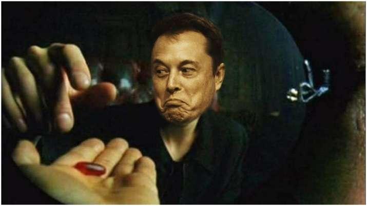 Elon Musk's Neuralink brain chip tests on pigs leave Twitterati fascinated
