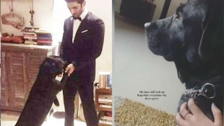 Sushant Singh Rajput's niece shares picture of his dog Fudge waiting for the actor to come back