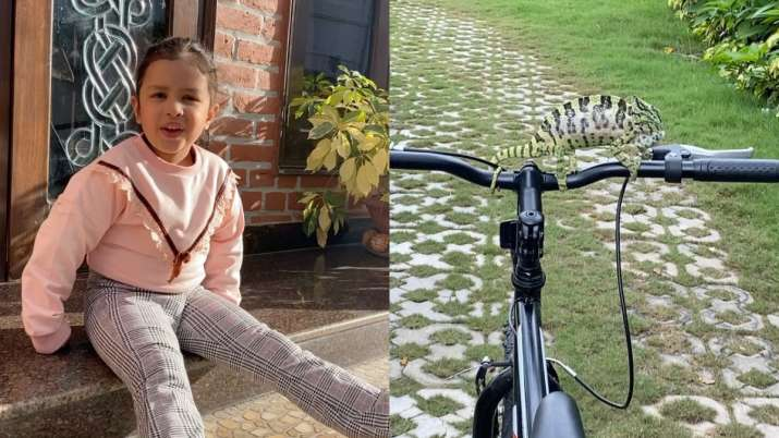 MS Dhoni's daughter Ziva makes new friend in the garden and it's a chameleon! Watch videos