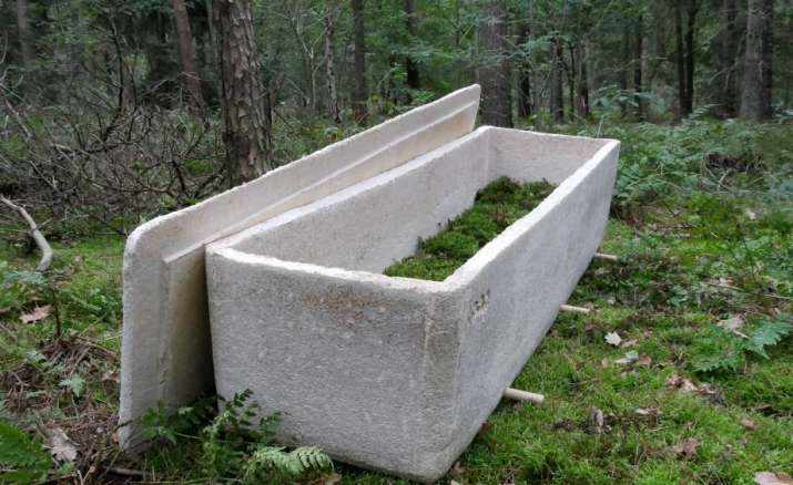 India Tv - The coffin also removes toxic substances and produces richer conditions in which to grow new trees