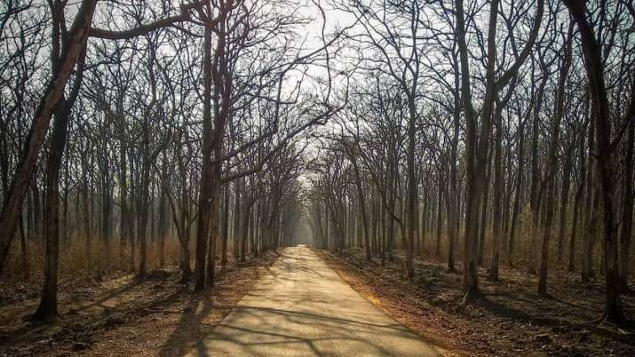 Vastu Tips: Cutting dry trees at wrong time can turn inauspicious. Know the right time