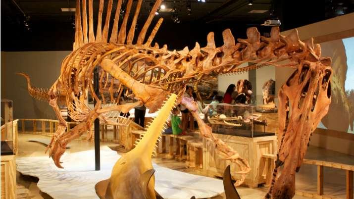 Spinosaurus had aquatic tendencies, confirms new study