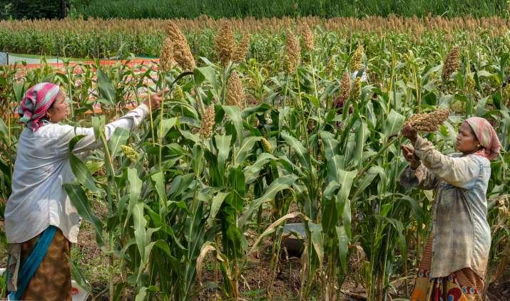 India's new farm laws will empower farmers, help them earn maximum profits: Israeli envoy