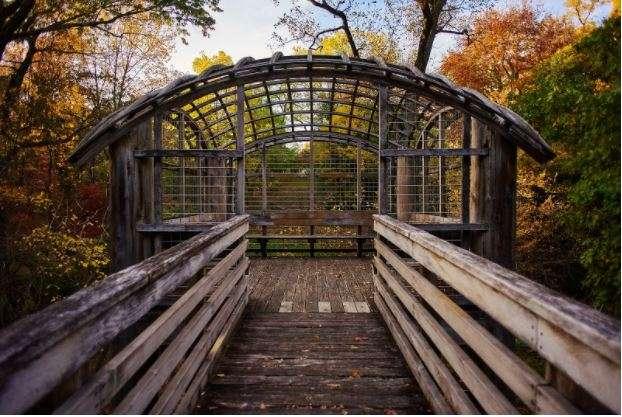 India Tv - Pavilion in the Trees photo credit Albert Yee