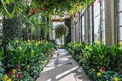 India Tv - Longwood Gardens photo by Becca Mathias