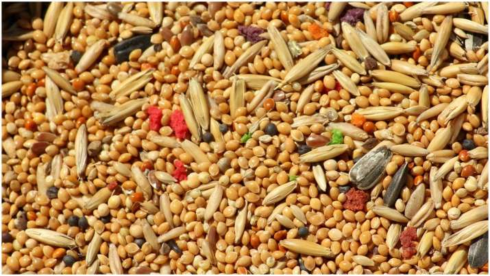 Coarse grains, millets must for balanced diet